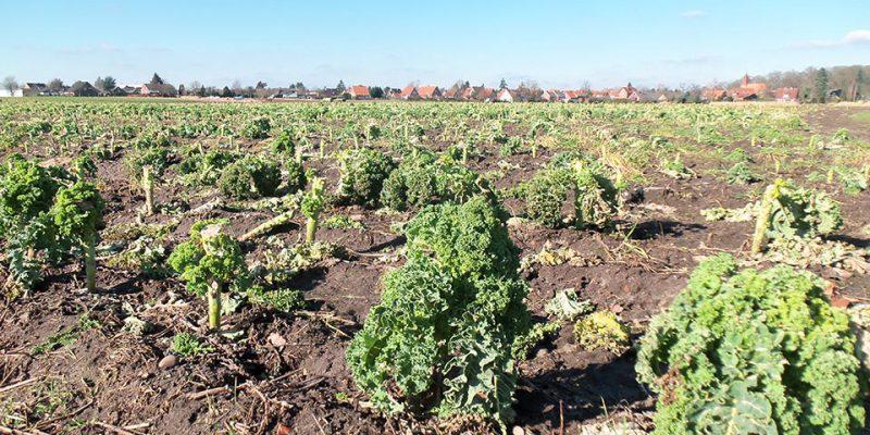 Gemüseanbau Bardowick © Roos/Schmalen