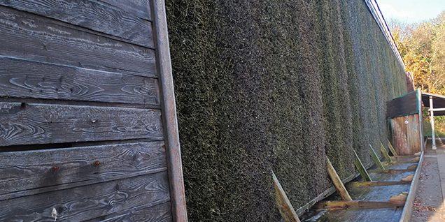 Die Dornenwand, unten der Kanal für die abfließende Sole, die im Innern des Gradierwerkes wieder hochgepumpt wird © Herrfurth