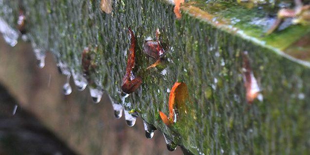 In das Auffangbecken herabrieselnde Soletropfen © Herrfurth