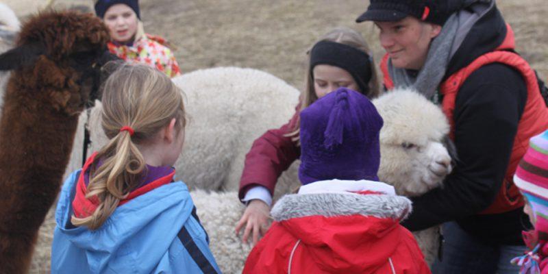 Für Kinder ist die Alpakafarm ein besonders großer Spaß © Sellmer/Klutzny