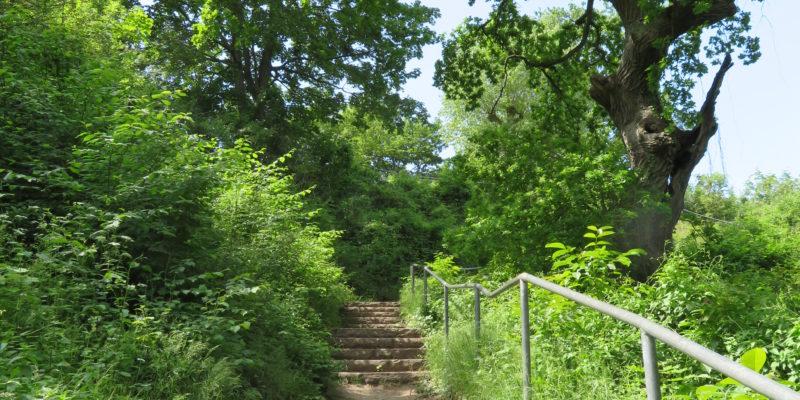 Der Treppenaufgang zum Kalkberg © Grosser