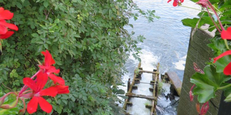 Ausblick von der Brausebrücke: Die Fischtreppe führt die Fische sachte von der einen Seite der Brücke auf die andere © Grosser