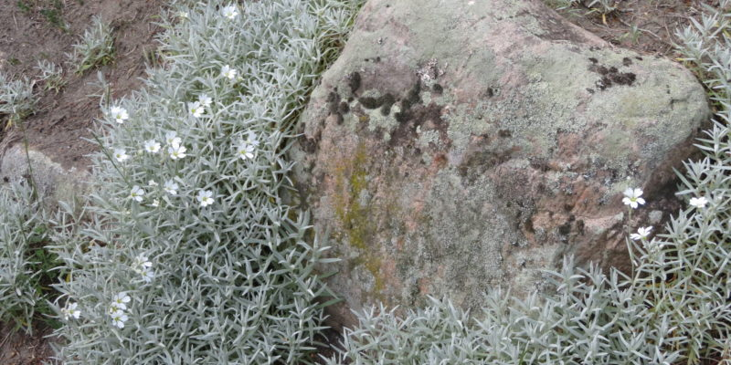 Pflanzen auf dem Kalkberg © Grosser