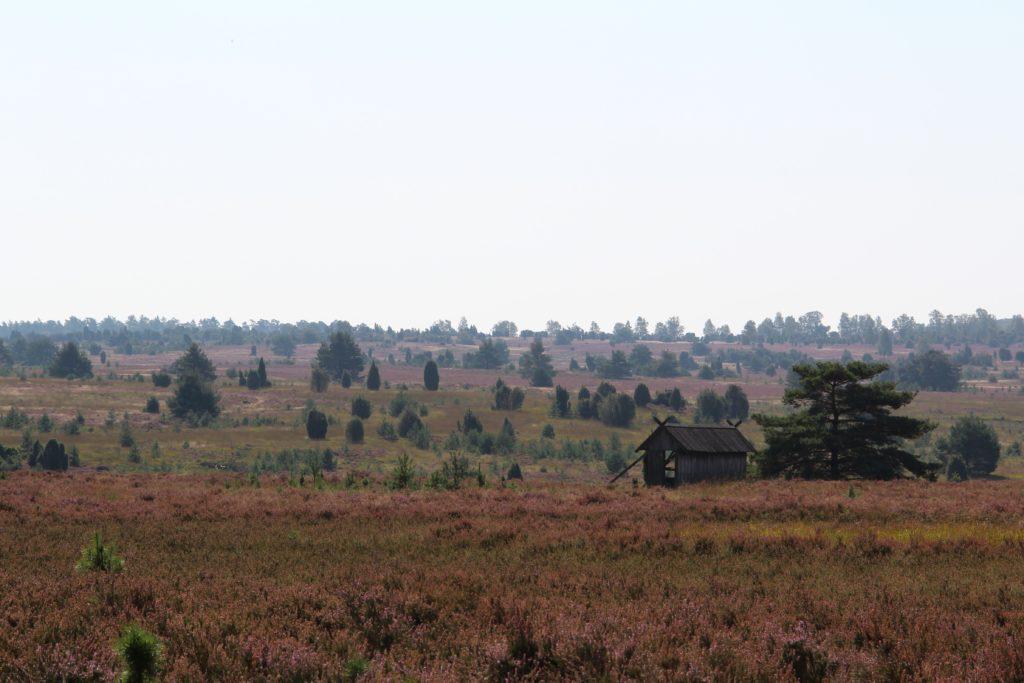 Typische Heidelandschaft © May/Trampe