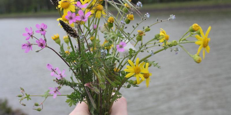 Viele Wildblümen säumen die Ufer des Kanals im Frühsommer © Remmers