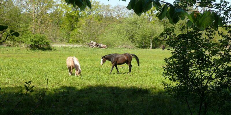 Pferde auf den Ilmenau-Wiesen © Stumpe