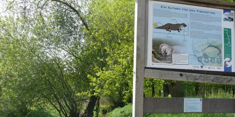 Naturinformationspunkt 23: Ein Altarm für den Fischotter © Stumpe