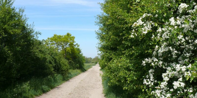 Schotterweg nach Ochtmissen © Stumpe